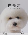 白モフ 〜A Dog Named ビションフリーゼ〜