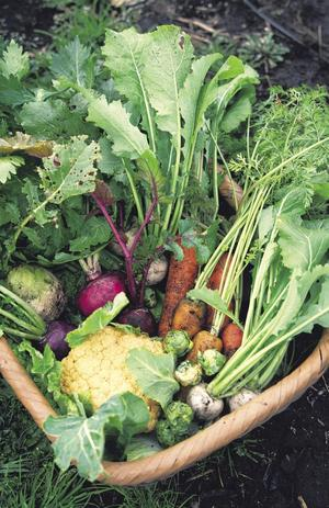 大分県 野菜.jpg